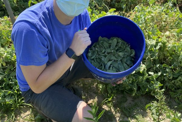 Volunteer displays a bucket of vegetables harvested from the farm field around him.